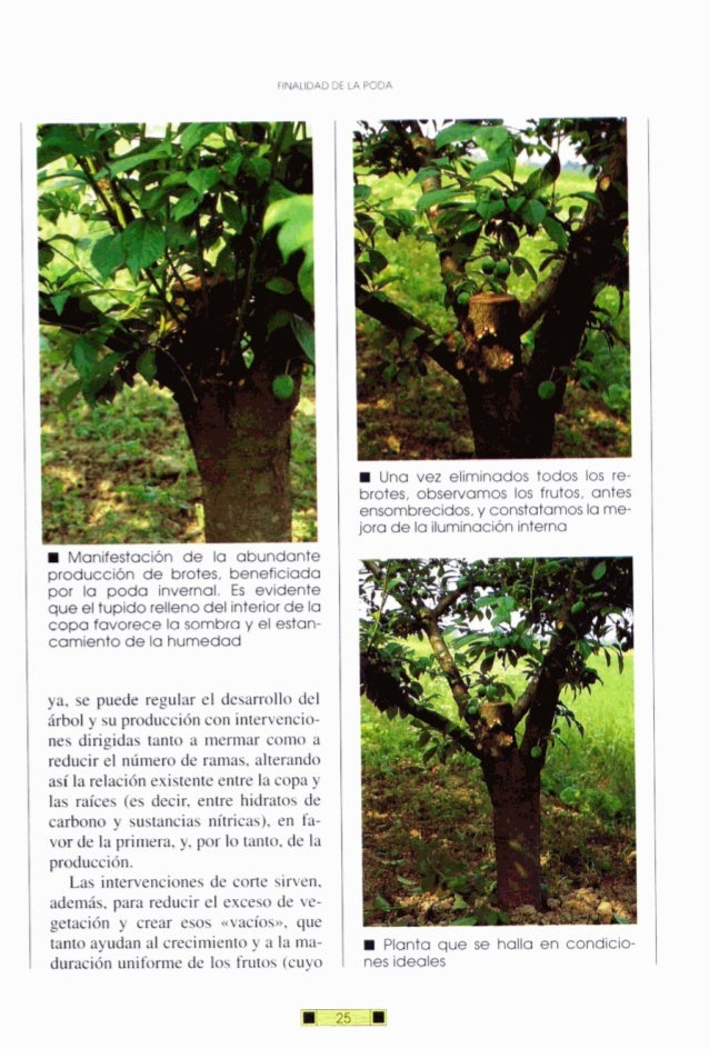 FINALIDAD DE LA PODA W Manifestación de la abundante producción de brotes, beneficiada por la poda invernal. Es evidente q...