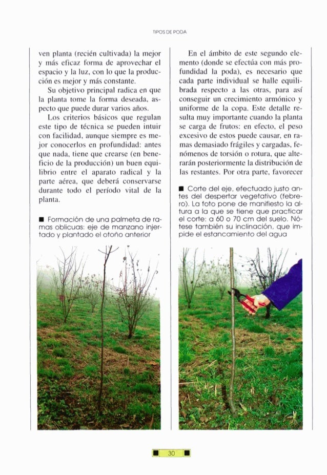 TIPOSDE W D A ven planta (recién cultivada) la mejor y más eficaz forma de aprovechar el espacio y la luz, con lo que la p...