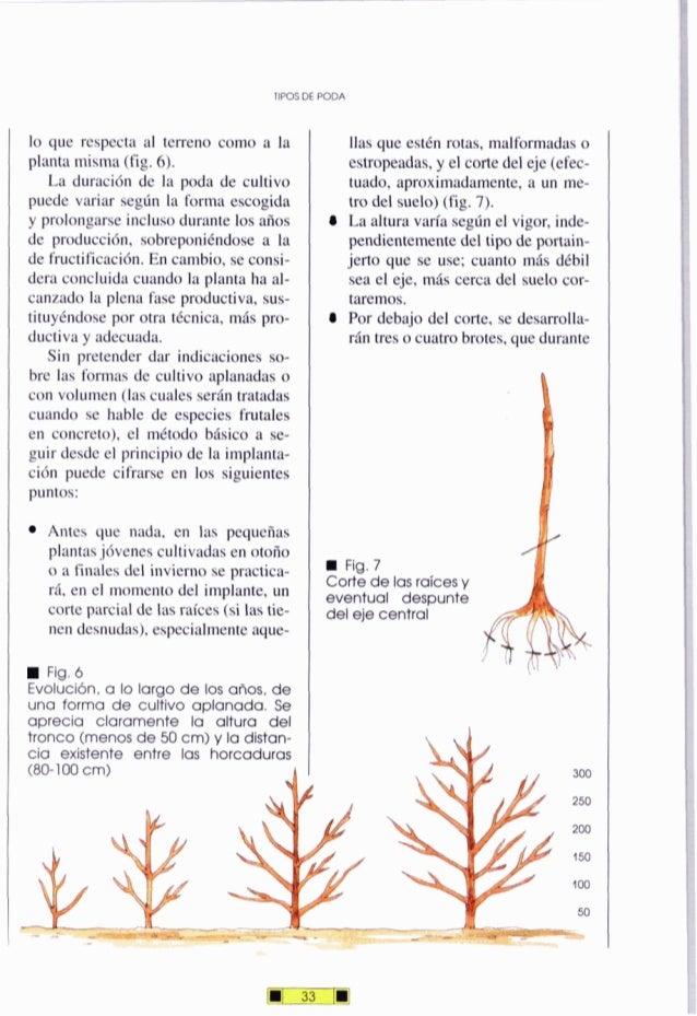 TIPOSDE PODA lo que respecta al terreno como a la planta misma (fig.6). La duración de la poda de cultivo puede variar seg...