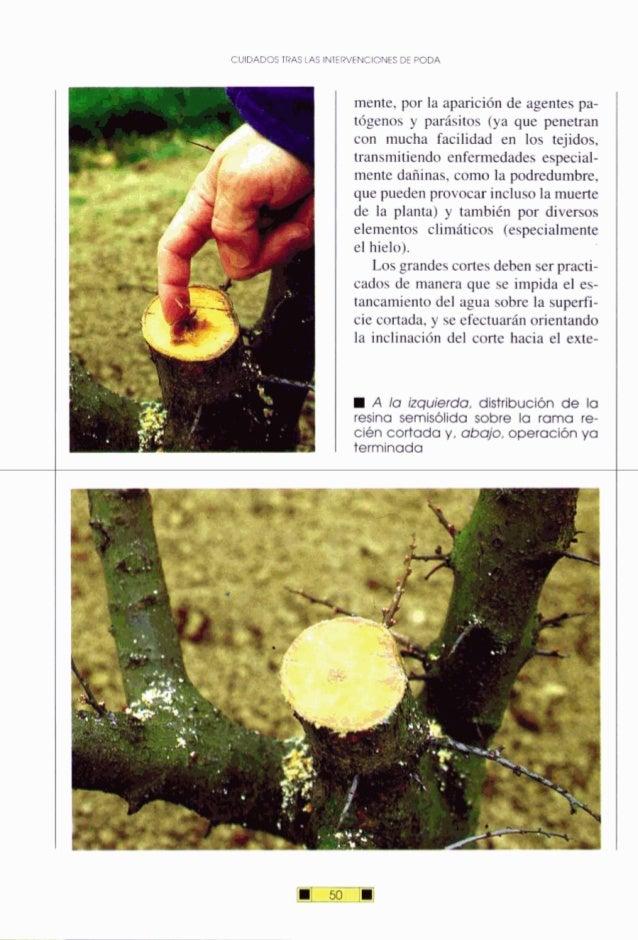 CUIDADOSTRAS LAS INIERVENCIONESDE PODA mente, por la aparición de agentes pa- tógeno~y parásitos (ya que penetran con much...