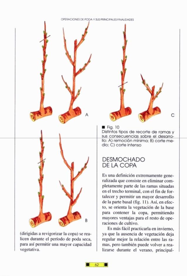 OPERACIONESDE PO- Y SUSPRINCIPALESFINAUDADES (dirigidasarevigorizar la copa) serea- licen durante el período de poda seca,...