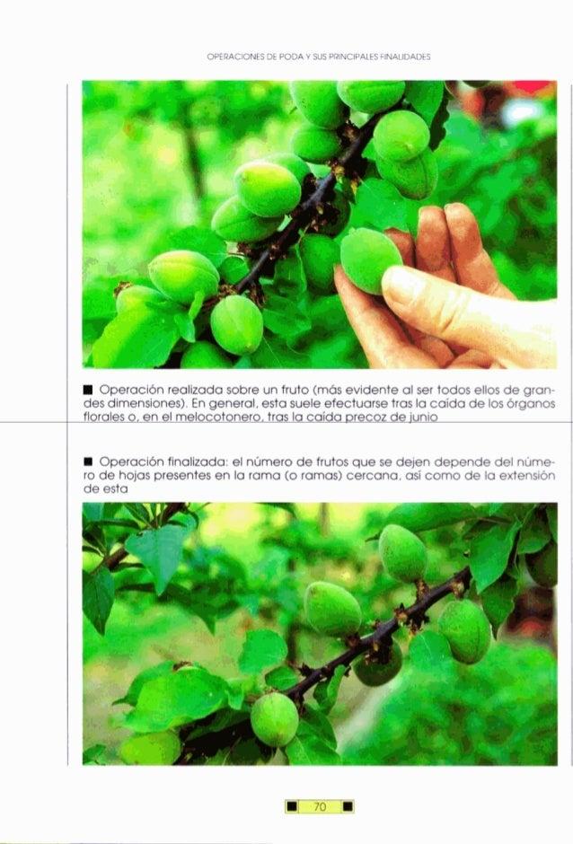 OPERACIONESDE PODA Y SUS PRINCIPALESFINALIDADES Operaciónrealizada sobre un fruto (más evidente al ser todos ellos de gran...