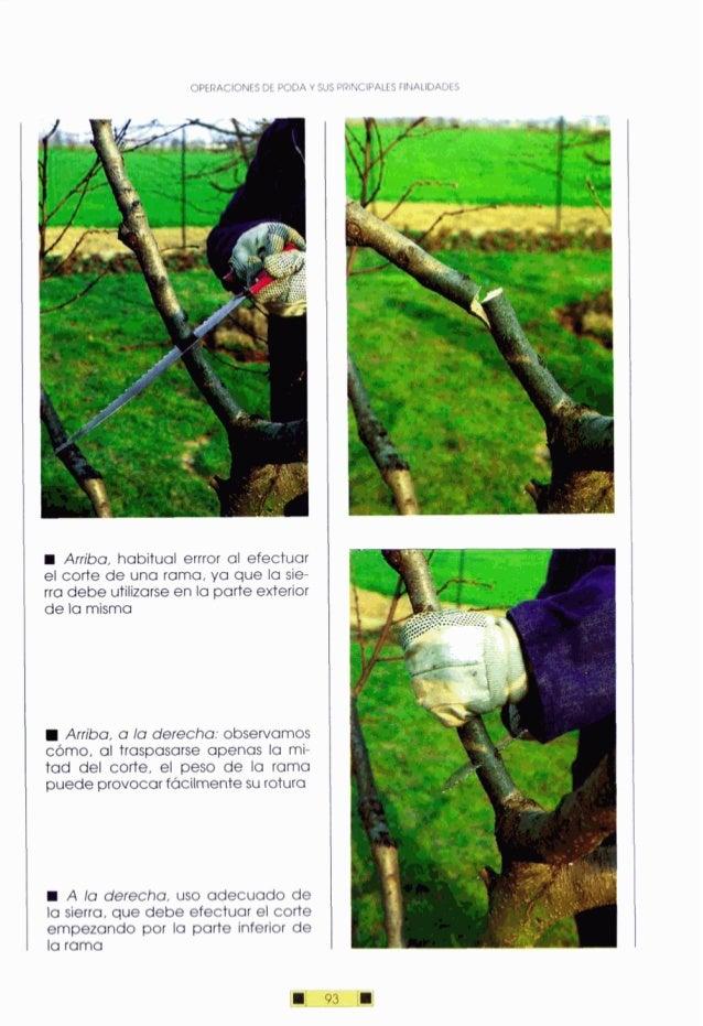 OPERACIONESDE PODAY SUS PRINCIPALESFINALIDADES Arriba, habitual errror al efectuar el corte de una rama, ya que la sie- rr...