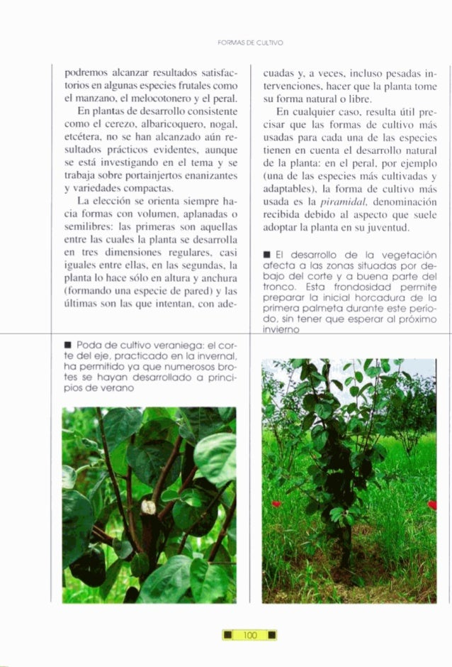 KIRMAS DE CULTIVO podremos alcanzar resultados satisfac- torios en algunasespeciesfrutalescomo el manzano, el melocotonero...