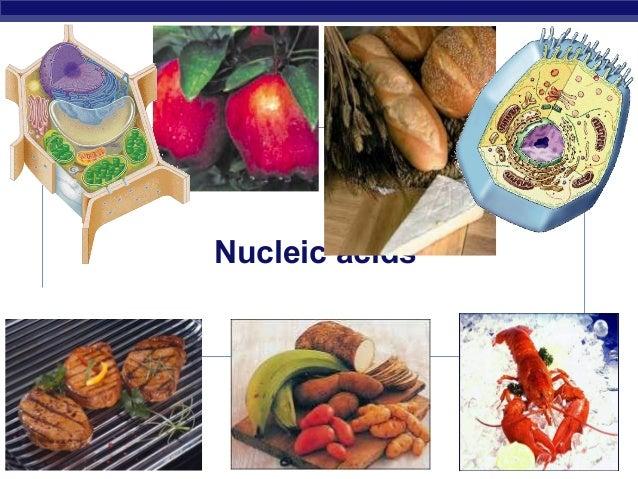 2006-2007AP Biology Nucleic acids