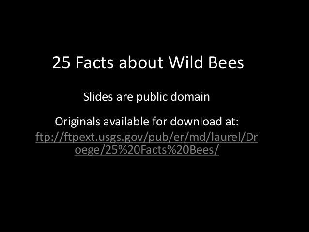 25 Facts about Wild Bees Slides are public domain Originals available for download at: ftp://ftpext.usgs.gov/pub/er/md/lau...