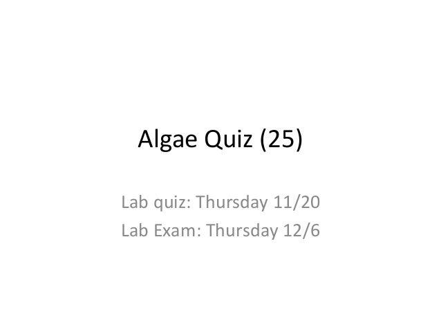 Algae Quiz (25) Lab quiz: Thursday 11/20 Lab Exam: Thursday 12/6