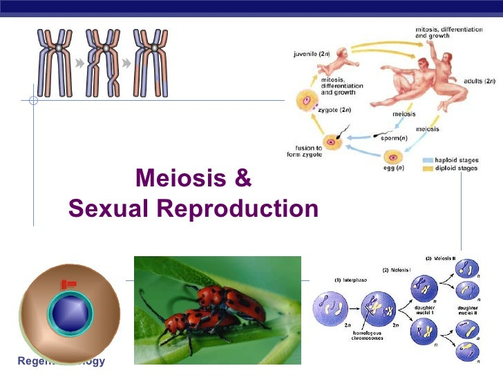 2006-2007 Meiosis & Sexual Reproduction