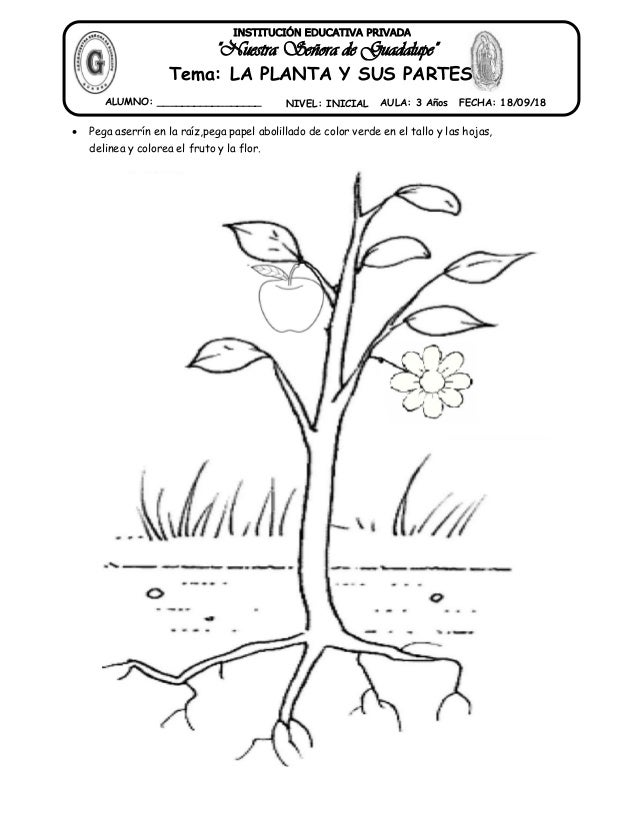 25 Tema Partes De La Planta