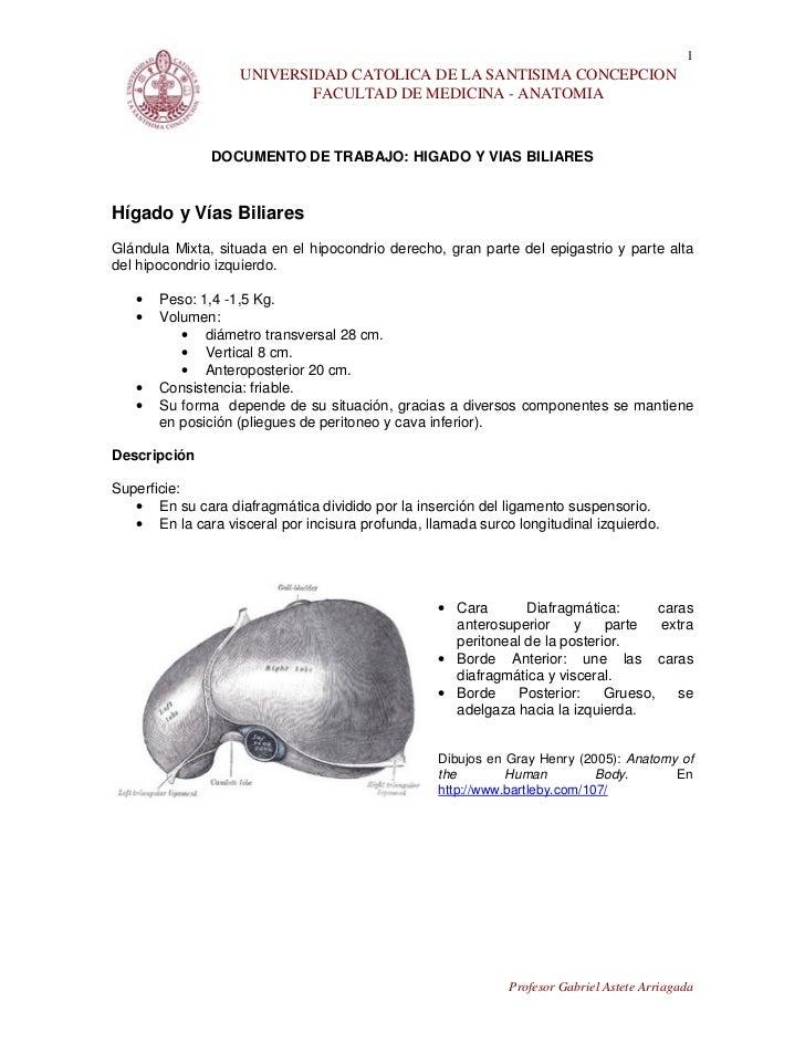 1                   UNIVERSIDAD CATOLICA DE LA SANTISIMA CONCEPCION                           FACULTAD DE MEDICINA - ANATO...