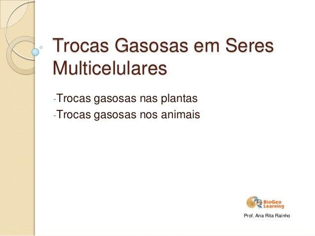 Trocas Gasosas em SeresMulticelulares-Trocas gasosas nas plantas-Trocas gasosas nos animaisProf. Ana Rita Rainho