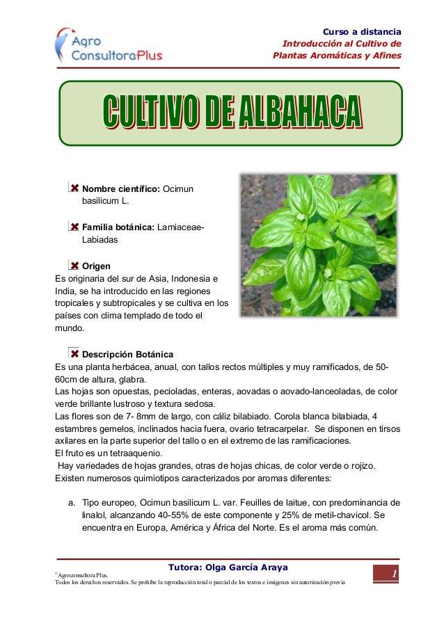 263284 cultivo albahaca pdf for Cultivo de albahaca en interior