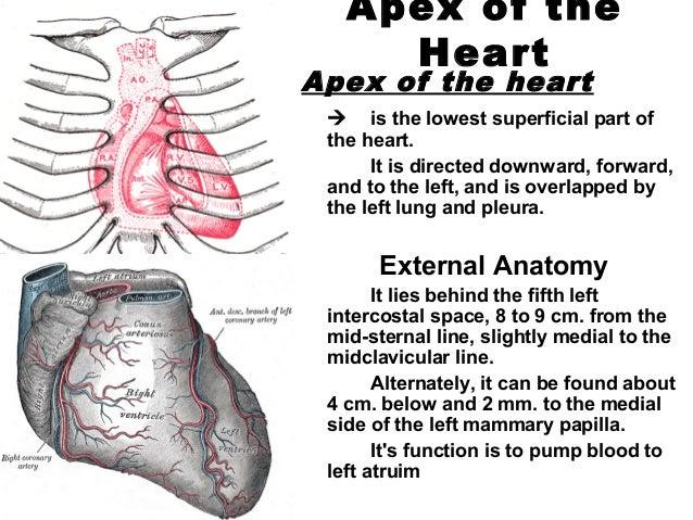 268099 human-heart, Cephalic Vein
