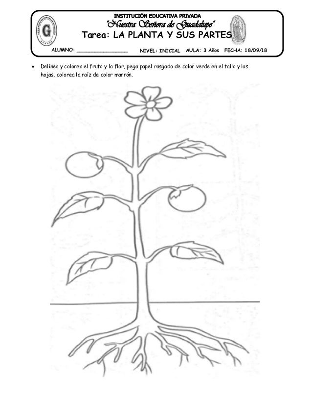 26 Tarea Partes De La Planta