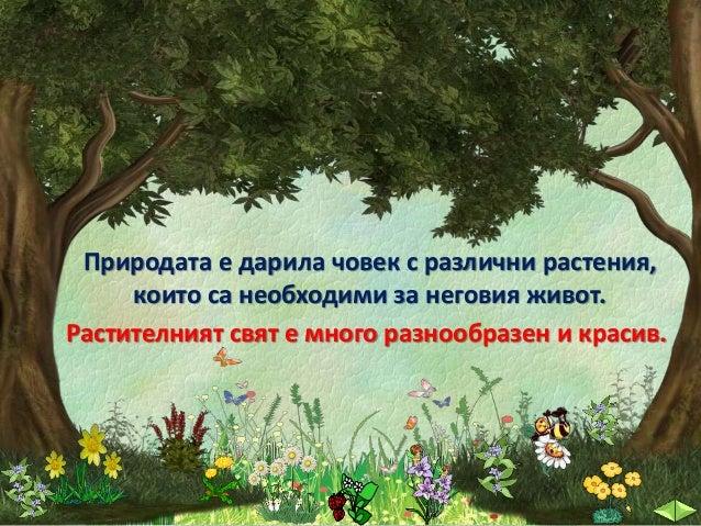 27. Разнообразният свят на растенията. Опити с растения - ОС, 2 клас - В. П. Slide 3
