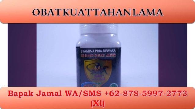 banting harga wa sms jamal 62 878 5997 2773 xl obat kuat ala