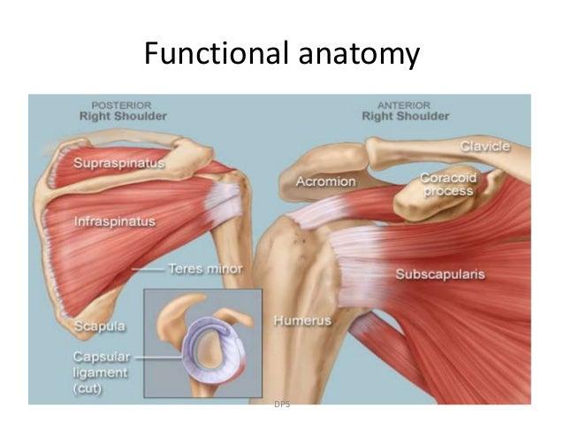 Pleasing Recurrent Shoulder Dislocation Dr Dharampal Swami Wiring Digital Resources Instshebarightsorg