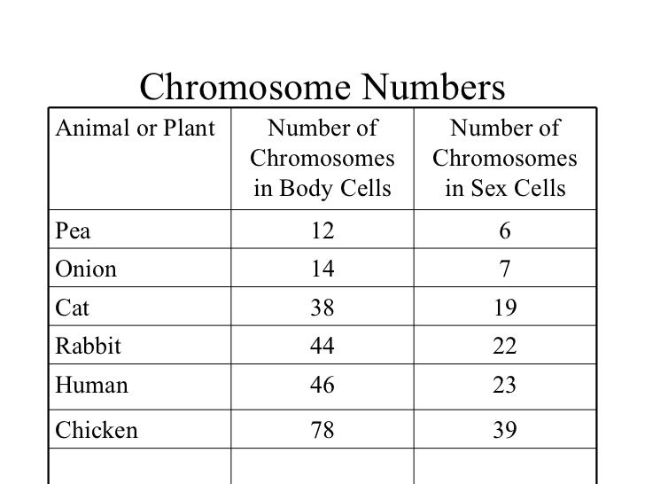 What is a Chromosome Worksheet – Number of Chromosomes Worksheet