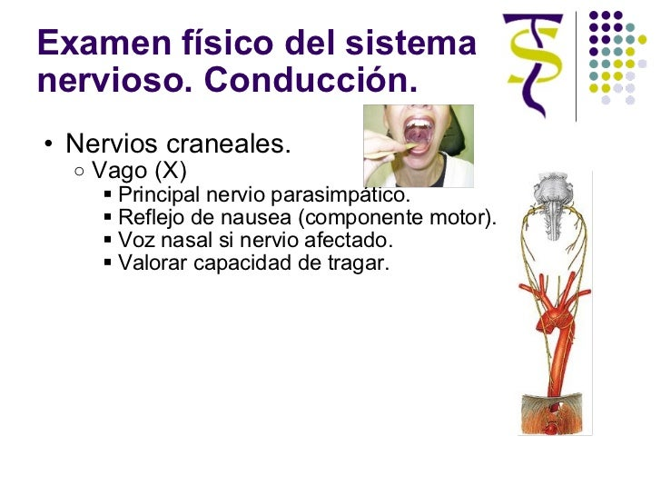 Examen físico del sistema nervioso. Conducción. <ul><ul><li>Nervios craneales. </li></ul></ul><ul><ul><ul><li>Vago (X) </l...