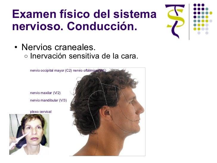 Examen físico del sistema nervioso. Conducción. <ul><ul><li>Nervios craneales. </li></ul></ul><ul><ul><ul><li>Inervación s...