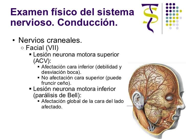 Examen físico del sistema nervioso. Conducción. <ul><ul><li>Nervios craneales. </li></ul></ul><ul><ul><ul><li>Facial (VII)...