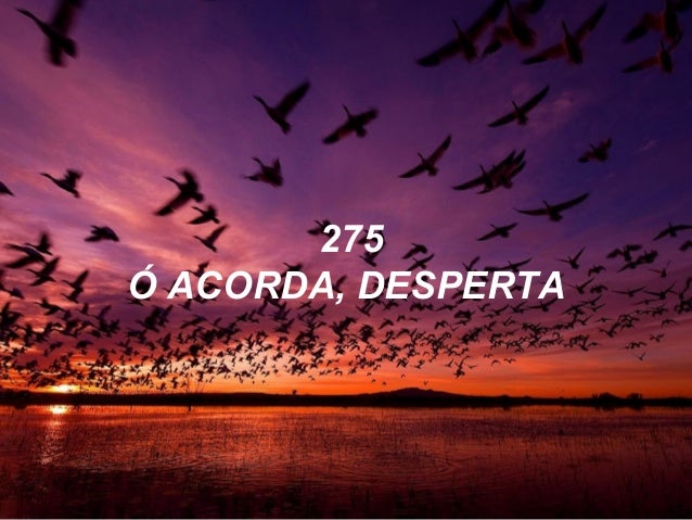 275 Ó ACORDA, DESPERTA