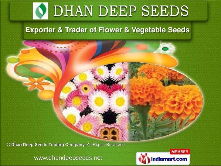 Exporter & Trader of Flower & Vegetable Seeds