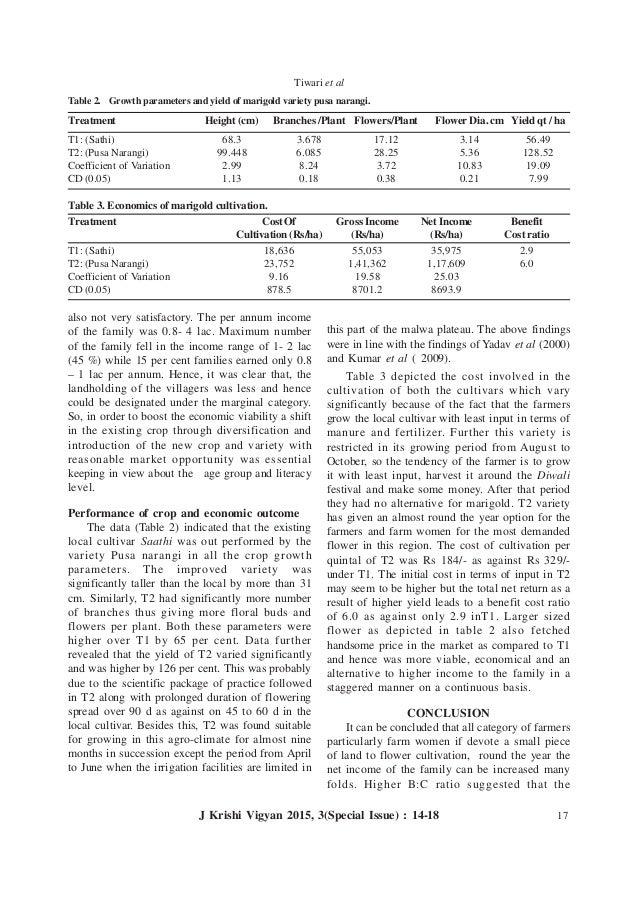 Global issue essay georgetown