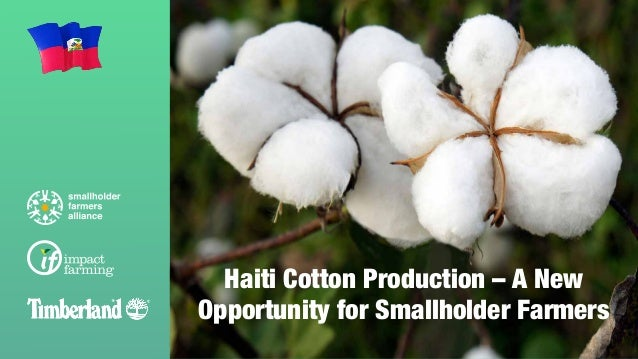 Haiti Cotton Production – A New Opportunity for Smallholder Farmers