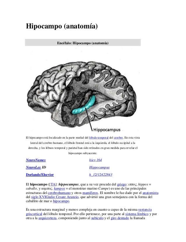 27+hipocampo (1)