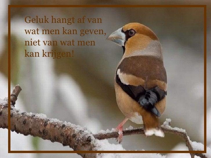 spreuken over vogels 27vogels spreuken over vogels