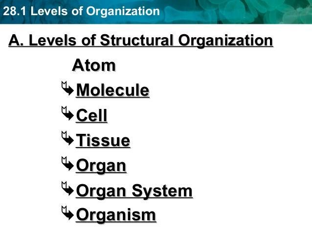 3. 28.1 Levels of Organization ...
