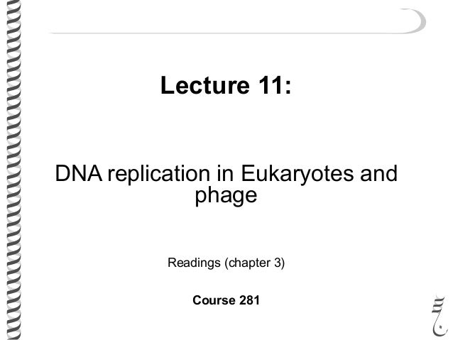 Lecture 11: DNA replication in Eukaryotes and phage Readings (chapter 3) Course 281