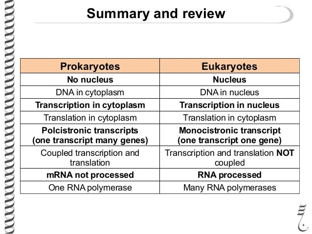 translation process in prokaryotes pdf
