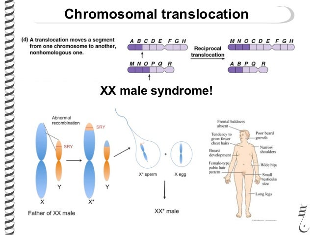 281 lec28 chromosomal_mutations