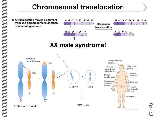 example of inversion chromosomal mutation