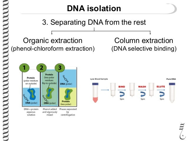 dna extraction essay Definition, purpose, and basic steps of dna cloning.