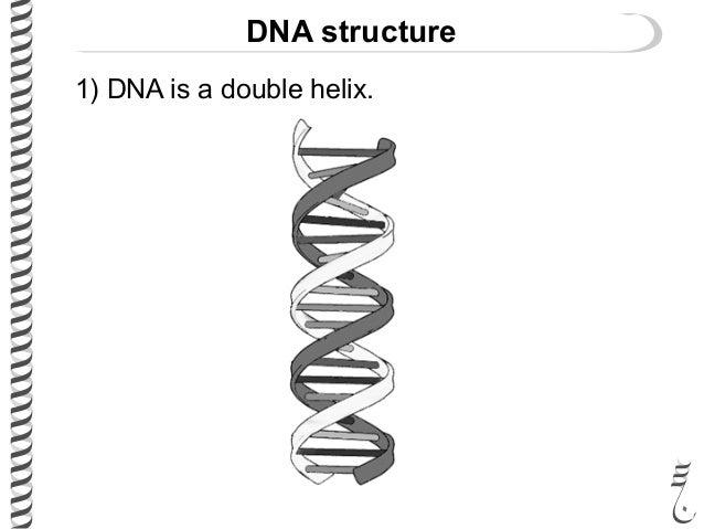 281 lec6 double_helix