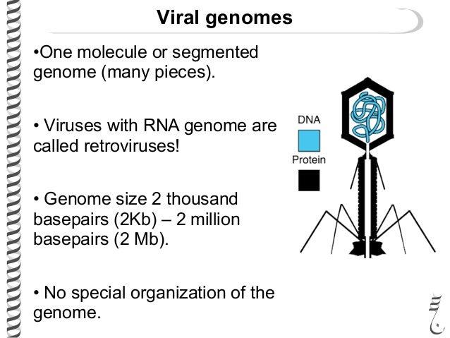 are viruses organized