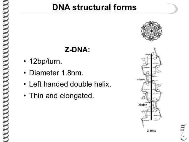 281 lec7 genomeorganization dna structural ccuart Choice Image