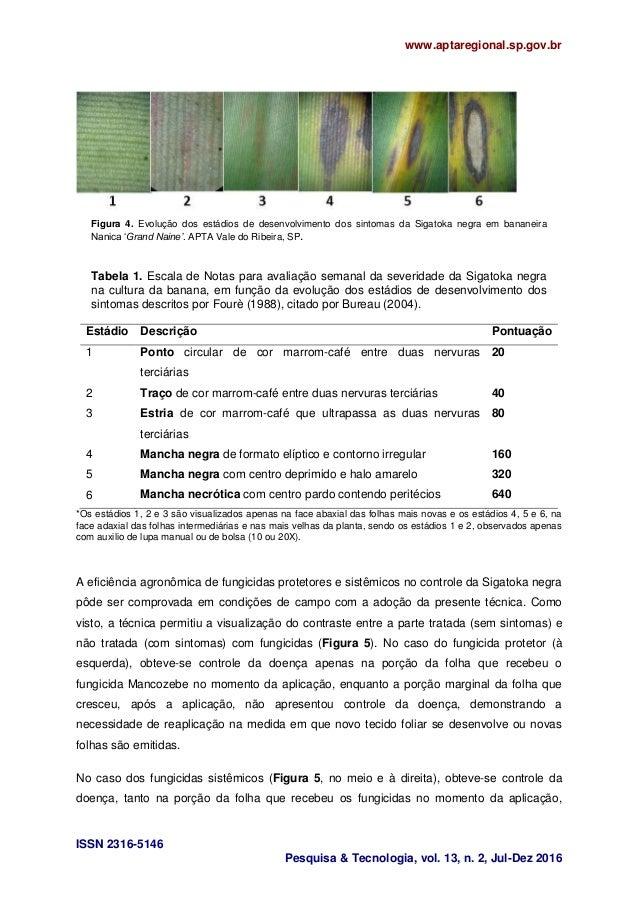 www.aptaregional.sp.gov.br ISSN 2316-5146 Pesquisa & Tecnologia, vol. 13, n. 2, Jul-Dez 2016 Figura 4. Evolução dos estádi...