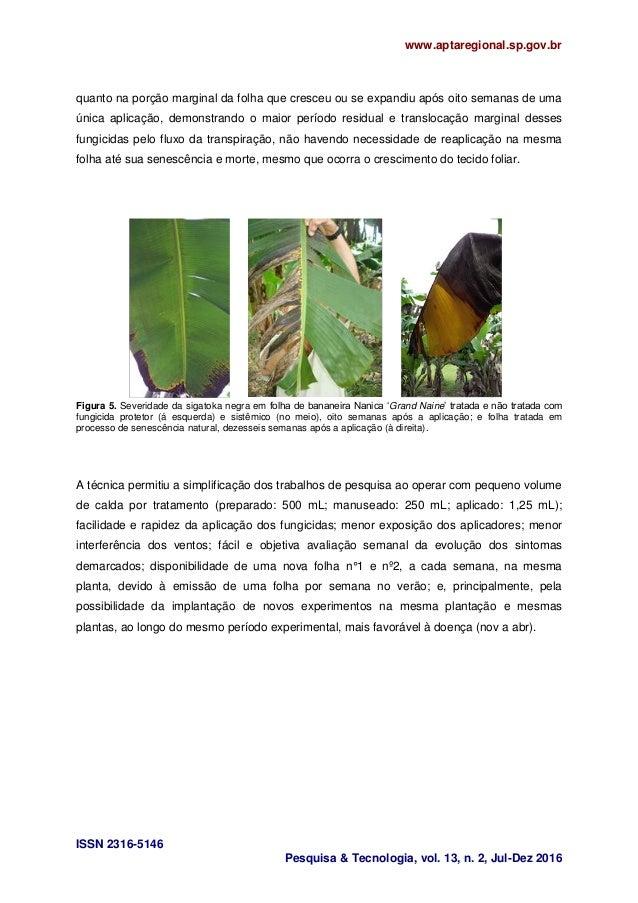 www.aptaregional.sp.gov.br ISSN 2316-5146 Pesquisa & Tecnologia, vol. 13, n. 2, Jul-Dez 2016 quanto na porção marginal da ...