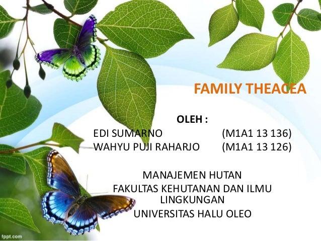 FAMILY THEACEA  OLEH :  EDI SUMARNO (M1A1 13 136)  WAHYU PUJI RAHARJO (M1A1 13 126)  MANAJEMEN HUTAN  FAKULTAS KEHUTANAN D...