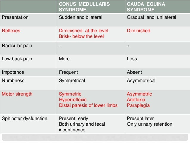 CAUDA EQUINA VS CONUS MEDULLARIS SYNDROME