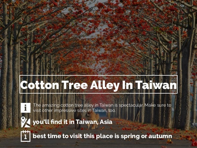 Cotton Tree Alley In Taiwan  The amazing cotton tree alley in Taiwan is spectacular. Make sure to  visit other impressive ...