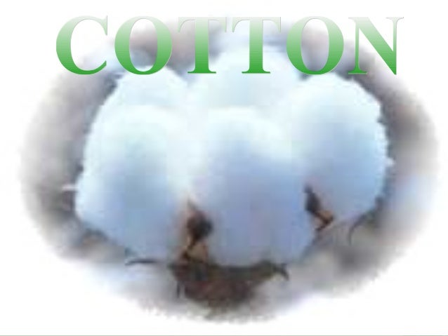 COTTON is a unicellular, natural fiber composed of almost pure cellulose. As taken from plants, the fiber is found in leng...