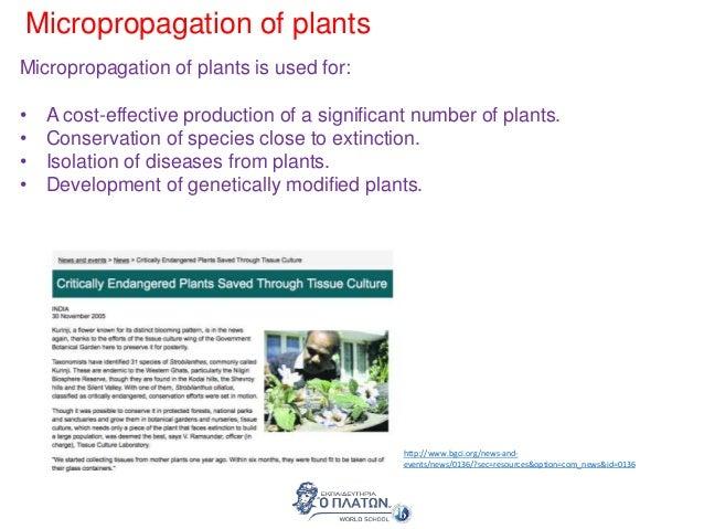 plant hormone