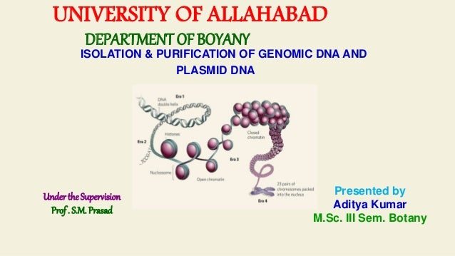 UNIVERSITY OF ALLAHABAD DEPARTMENT OF BOYANY ISOLATION & PURIFICATION OF GENOMIC DNA AND PLASMID DNA Under the Supervision...