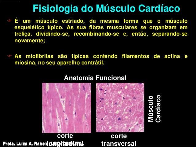 Fisiologia do Músculo Cardíaco  É um músculo estriado, da mesma forma que o músculo   esquelético típico. As sua fibras m...