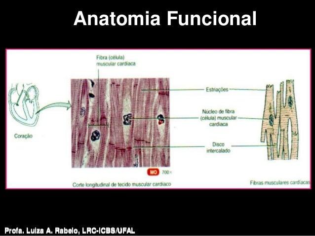 Anatomia FuncionalProfa. Luiza A. Rabelo, LRC-ICBS/UFAL   Profa. Luiza A. Rabelo, LRC-ICBS/UFAL